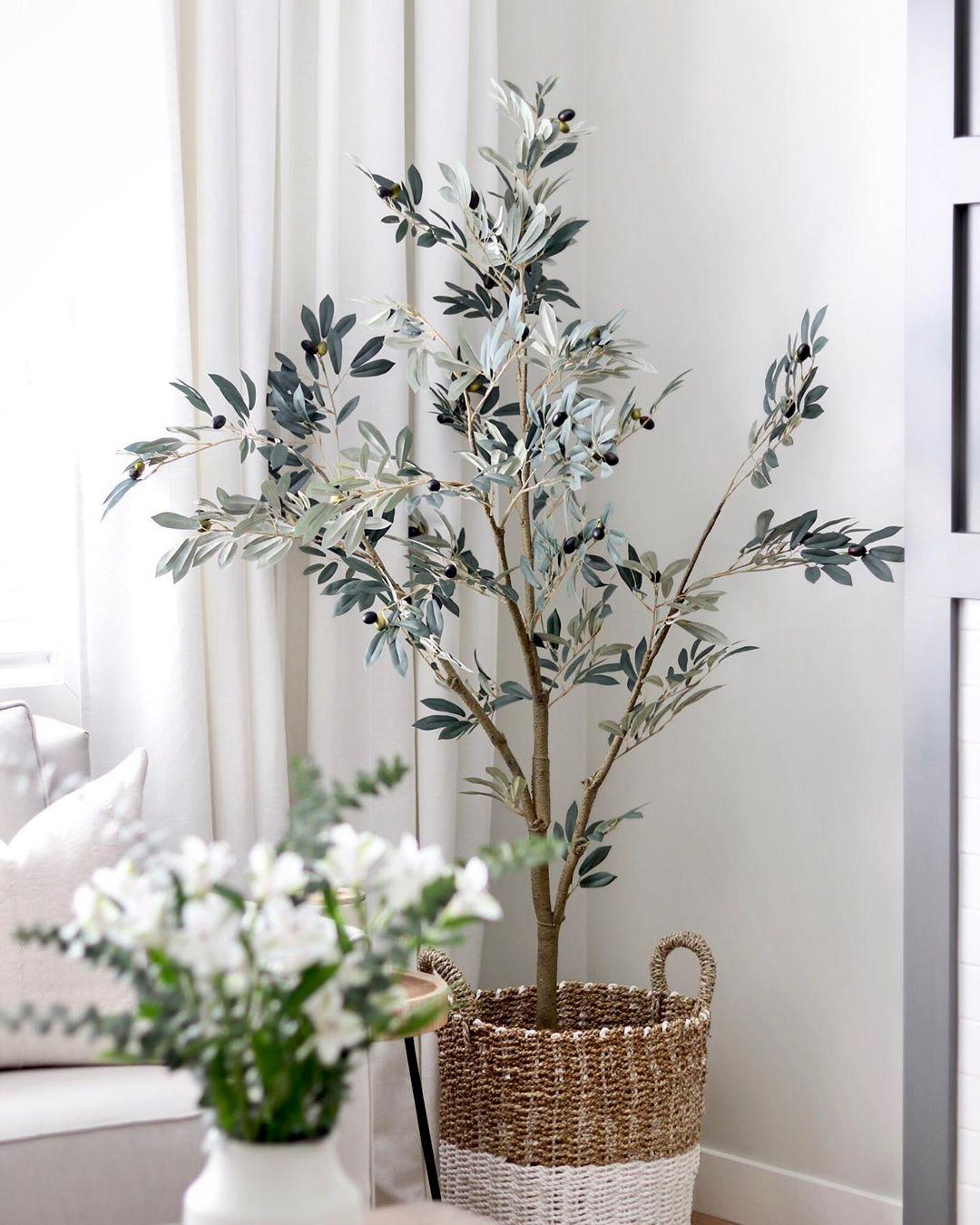 7 Деревьев, которые можно выращивать в помещении