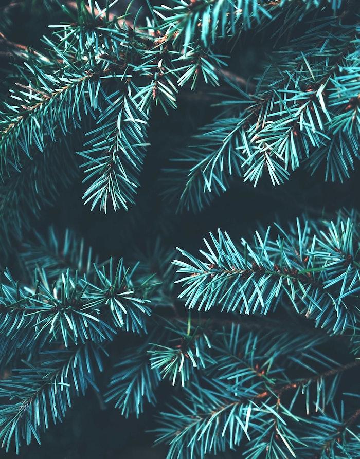 9 Причин не выбрасывать дерево после Нового года