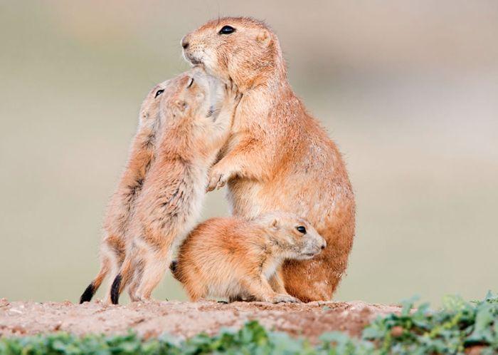 Очаровательные детишки животных {60 Фото}